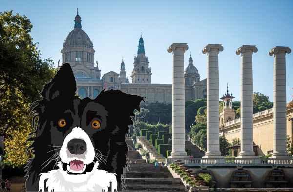 Perros en adopción en Barcelona