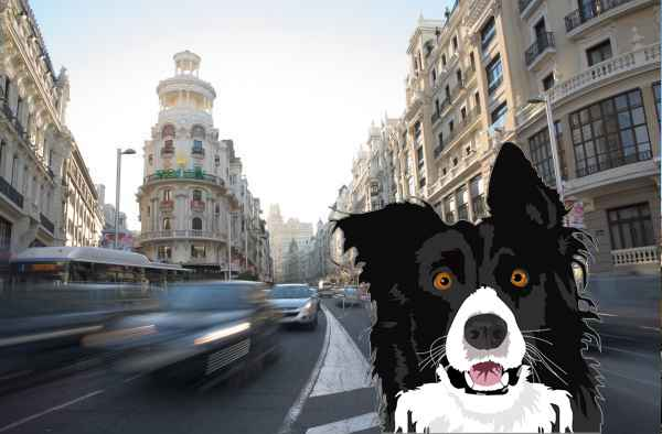 Perros en adopción en Madrid