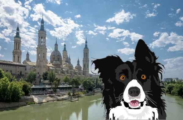 Perros en adopción en Zaragoza